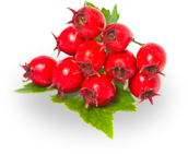 tinnitus ingredients hawthorne berry
