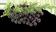 tinnitus ingredients juniper berry