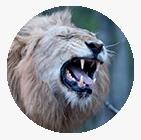 tinnitus symptoms roaring