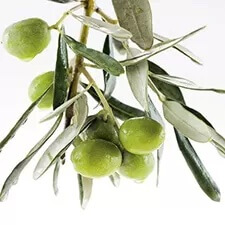 olive extract